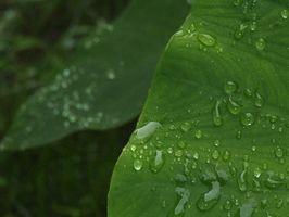 Las plantas que crecen bien al aire libre en la Florida