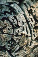 Los árboles frutales resistente a las termitas