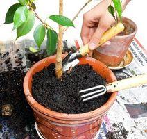 El drenaje de las plantas en maceta