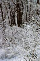 Maneras de proteger los árboles de las heladas y vientos altos