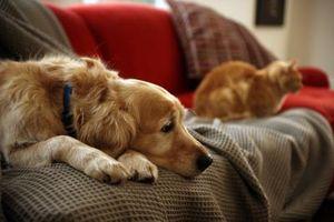 Inicio Recetas para la alfombra manchas de las mascotas