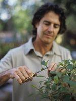 Maneras de controlar el crecimiento de plantas