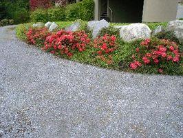 Rápido Crecimiento Las plantas de un jardín