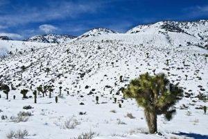 Los arbustos del desierto del Nevada