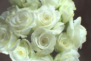 Significado de la flor blanca de Rose