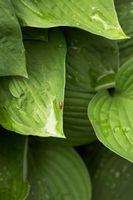 Hongos de las plantas