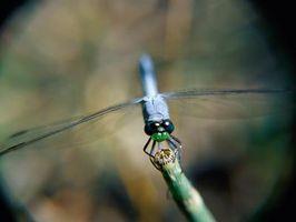 ¿Cómo deshacerse de los mosquitos en la Casa de las plantas