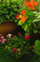 Como agua del jardín plantadores