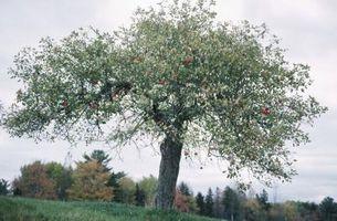 Árboles frutales de arcilla del suelo