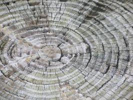 ¿Qué hace que los anillos anuales en un árbol?