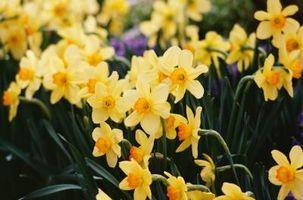 El significado de las flores en el mes de marzo