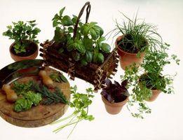 De hoja ancha y gramíneas Hierbas