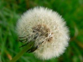 Ciclo vital de una planta para el preescolar