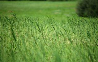 ¿Qué tipo de hierba crecerá sin sol?