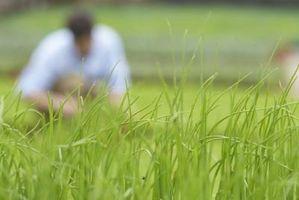 Los mejores fertilizantes hechos en casa para el césped