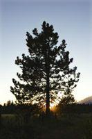 Los árboles que no deje caer las hojas