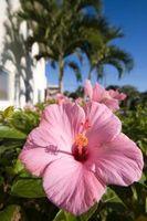 Una lista de los Comunes Las flores del jardín en Florida