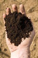 Condiciones óptimas de crecimiento para Switchgrass